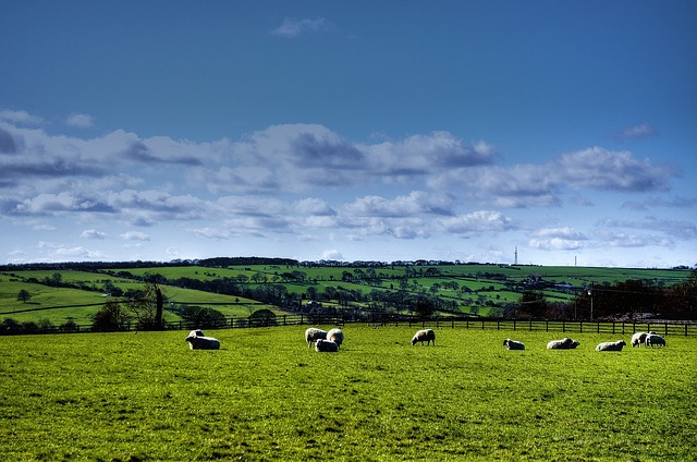 sheep-69406_640